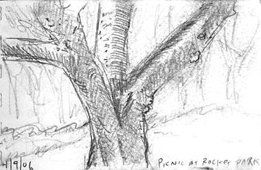 treeatrocketpark380.jpg