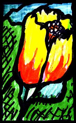 tulippolarmay06clean260.jpg